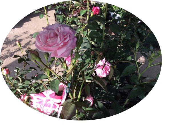 無題2.pngのサムネール画像のサムネール画像のサムネール画像